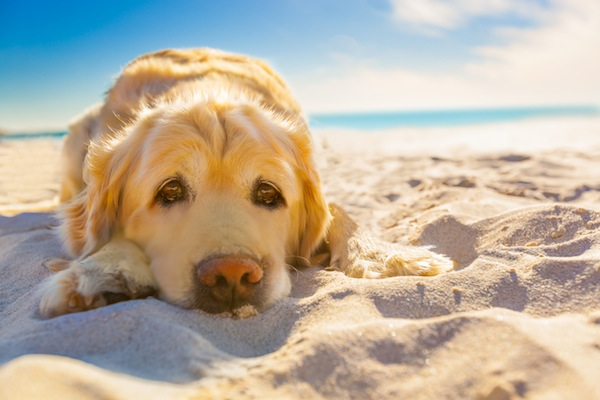 Pampering Your Dog with a Getaway Vacation
